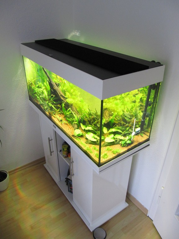 led beleuchtung aquarium erfahrungen haus ideen. Black Bedroom Furniture Sets. Home Design Ideas
