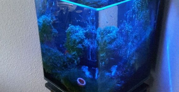 Schallex 32564 Nano Cube Meets Fluval Edge intended for sizing 810 X 1080